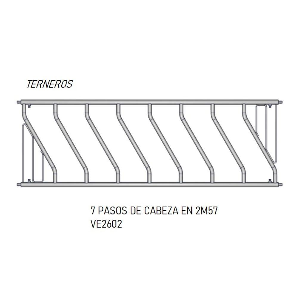 PASO CABEZA 7